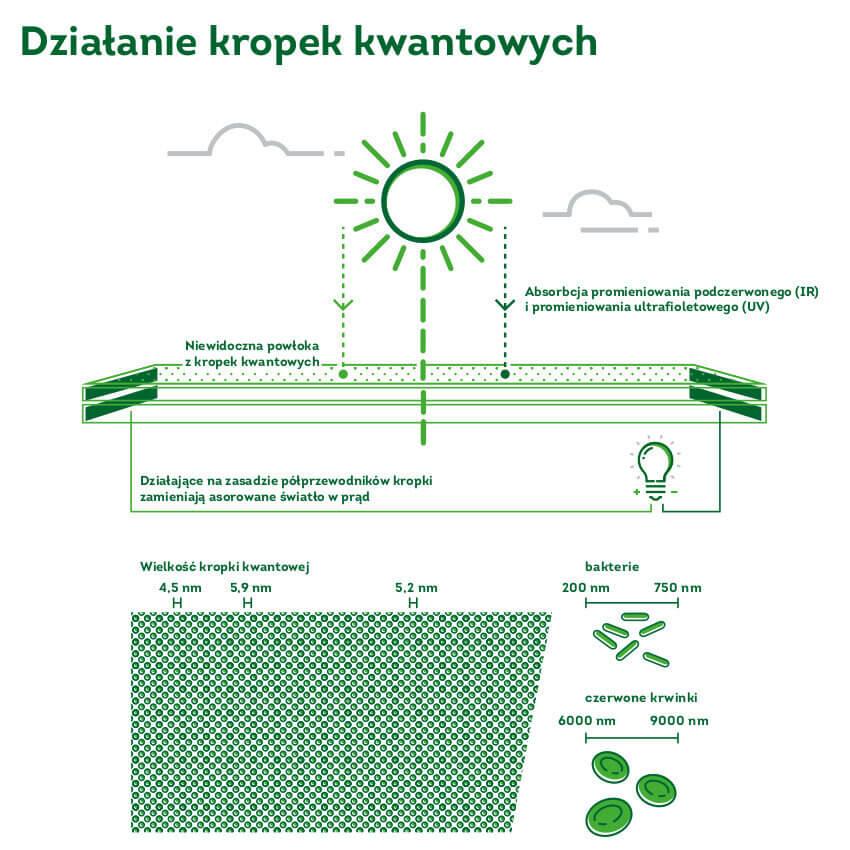Zabka-ekosklep-zielona-energia-kropki-kwantowe.jpg