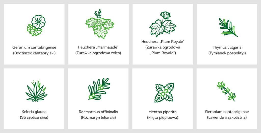 Zabka-ekosklep-czyste-powietrze-rosliny-ikony.jpg